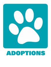 Adoptions and Rescue